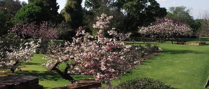 Picnic spot at Johannesburg Botanical Garden