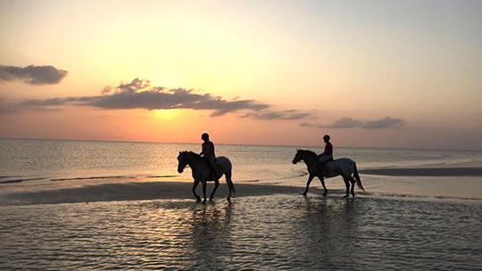 Horse Ride Picnic Durban