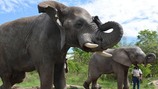 Elephant Encounter Picnic Experience Pretoria